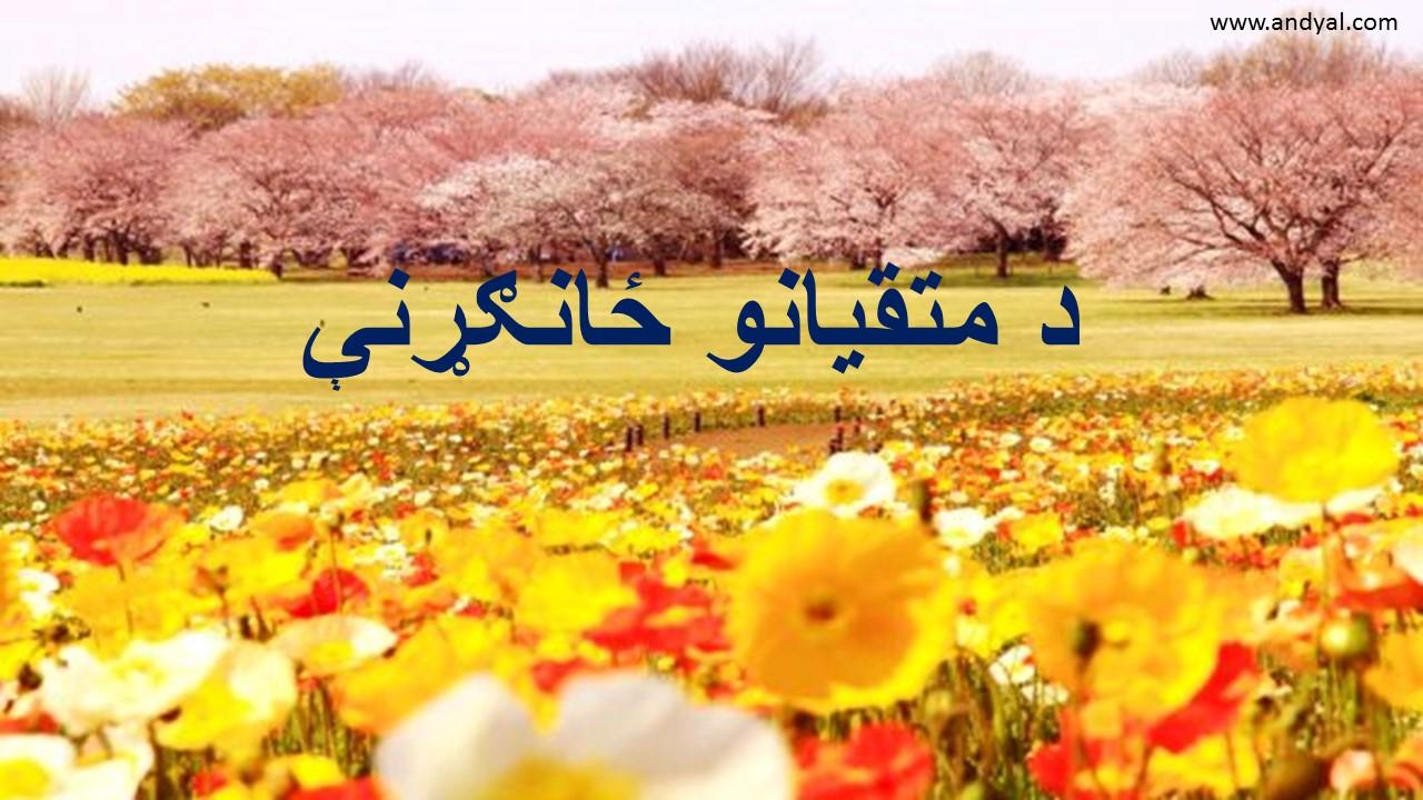د قرآن مجید تلاوت او پکې تدبر کول/ د متقیانو ځانګړنې